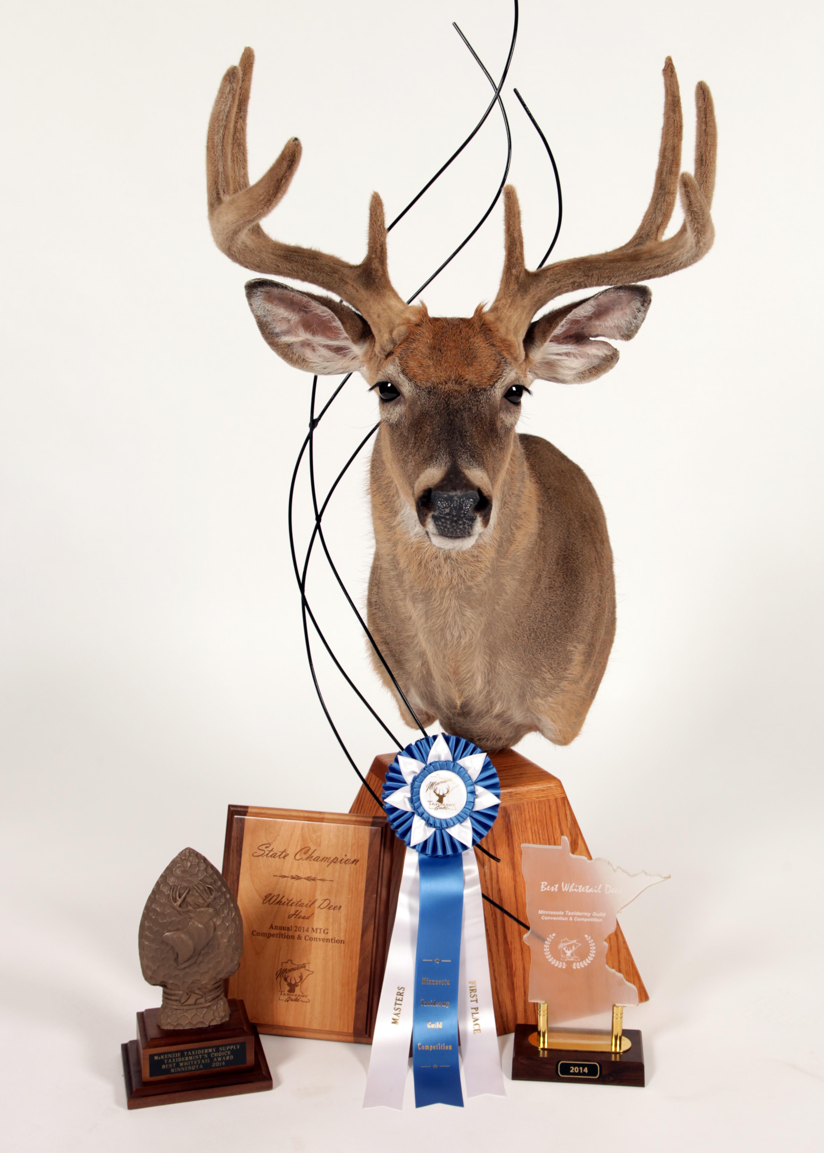 2014 State Champion Whitetail Deer