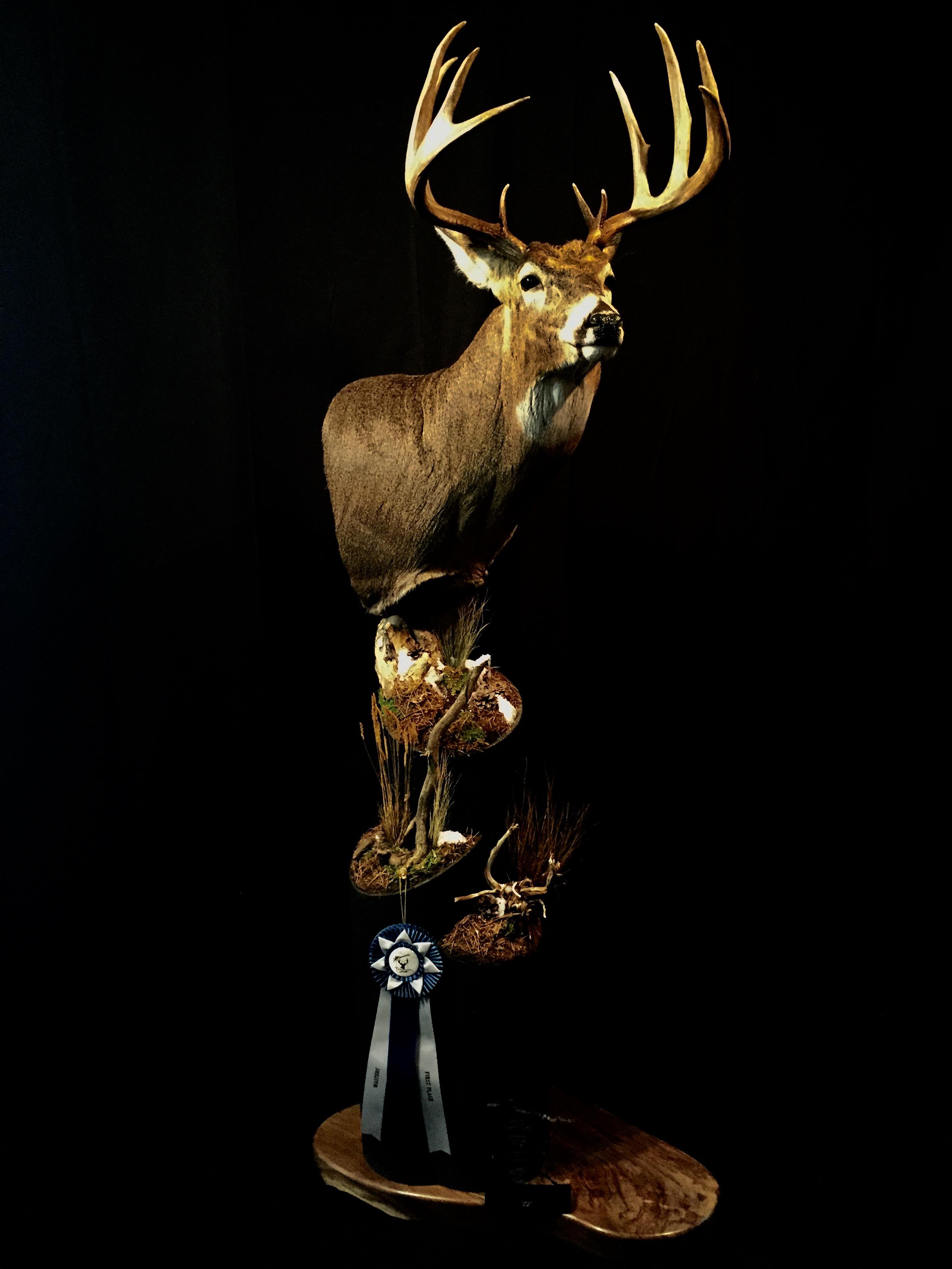 2017 State Champion Whitetail Deer