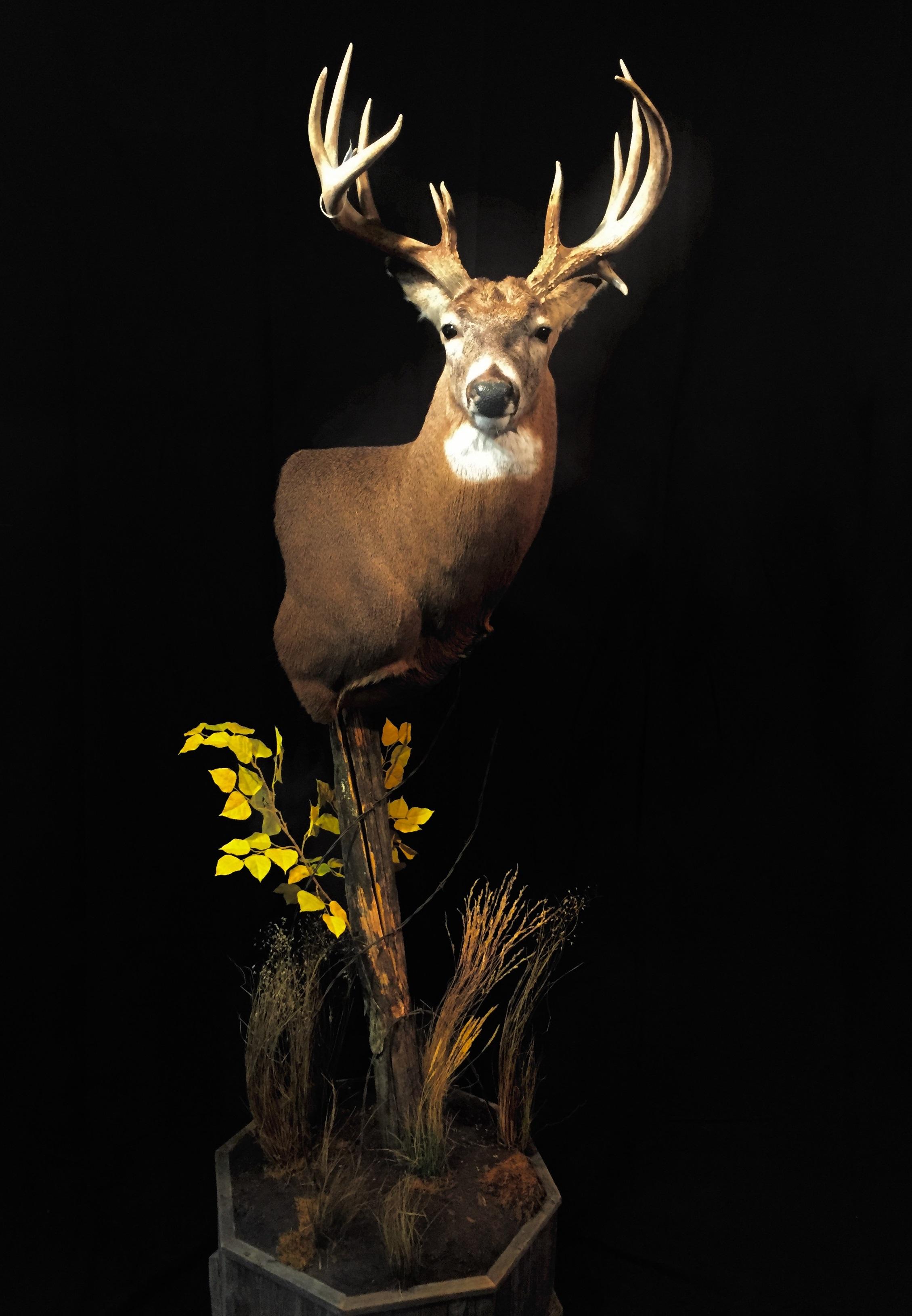 Deer-Ped-Cropped-2